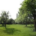Silver House - Garden