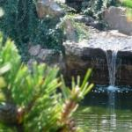 Top Hotel - Japanese Garden