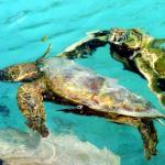 Turtles - Port Vila